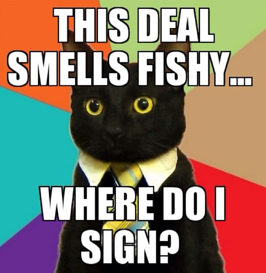 funny-business-cat-deal-fishy