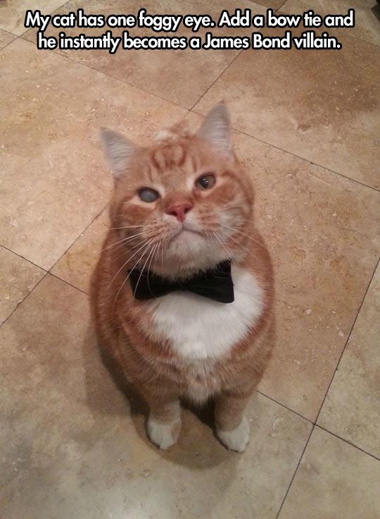 funny-cat-James-Bond-villain-bow-tie