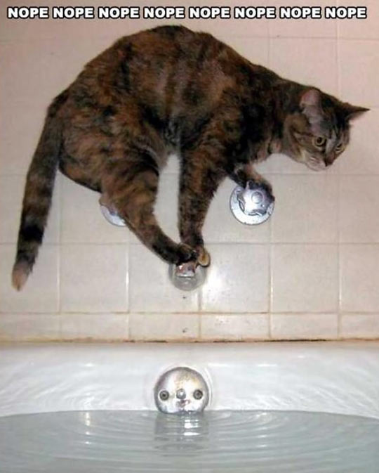 funny-cat-bath-shower-scared