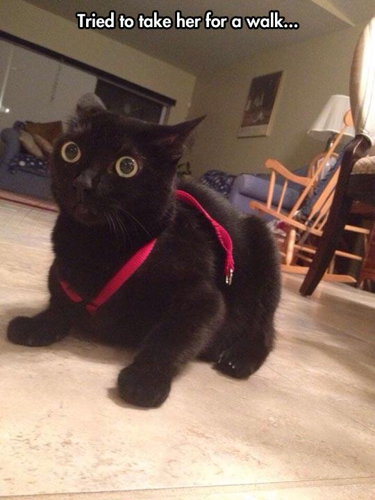 Every cat's nightmare…