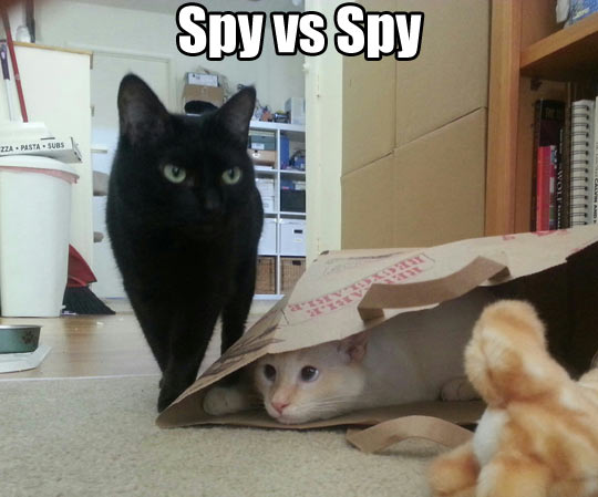 funny-cat-black-white-hidden-bag