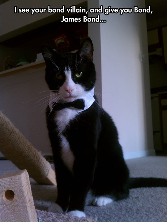 James Bond cat…
