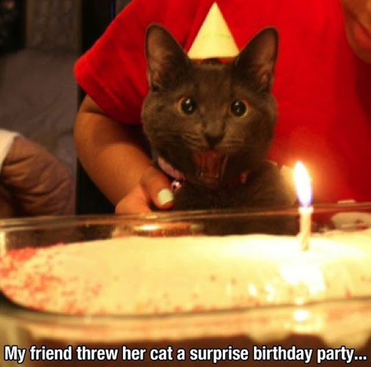 funny-cat-cake-candle-surprise-party