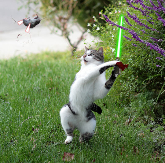 funny-cat-fighting-mouse-lightsaber-grass
