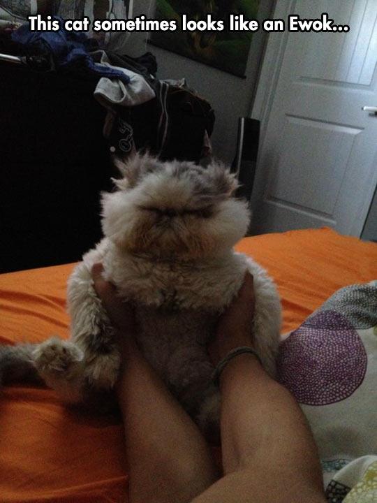 funny-cat-fur-bed-Ewok