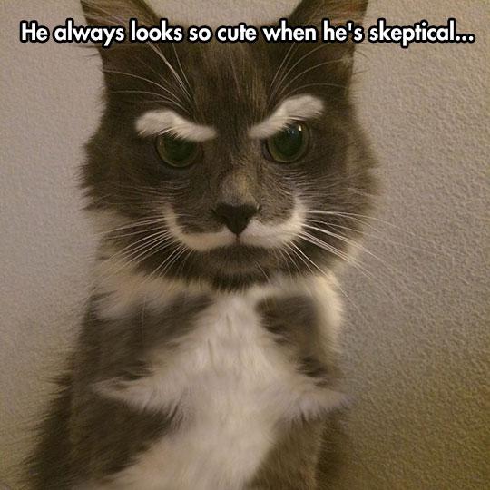Skepticat…