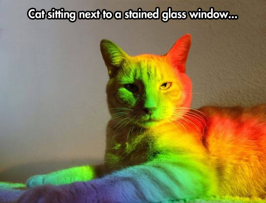 The most fabulous cat…