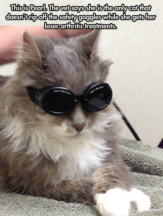funny-cat-goggles-therapy-fancy