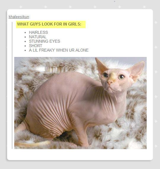 funny-cat-hairless-eyes-natural