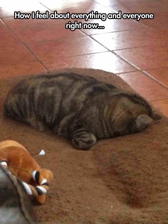 funny-cat-kitten-dog-sleeps-bed-carpet