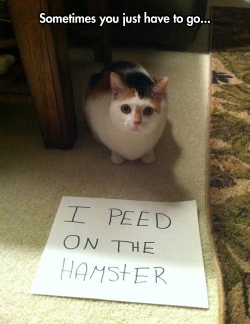 funny-cat-kitten-hamster-pee