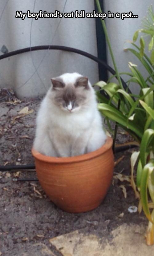 funny-cat-kitten-plant-pot