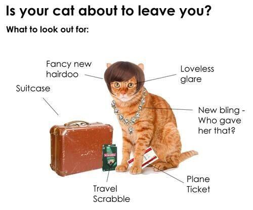 funny-cat-kitten-suitcase-leaving