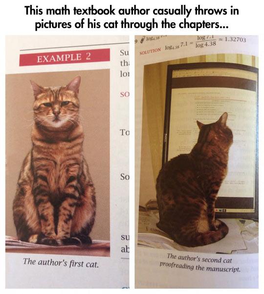funny-cat-kitten-textbook-math