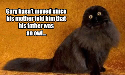 funny-cat-kitty-owl-son