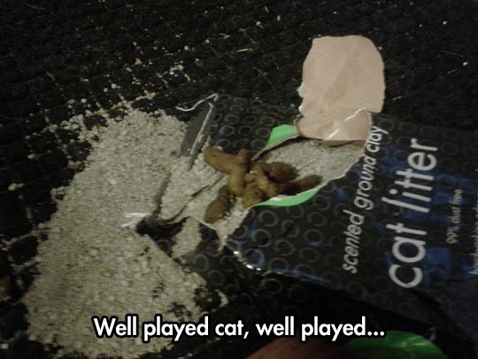 funny-cat-litter-ground-clay-package