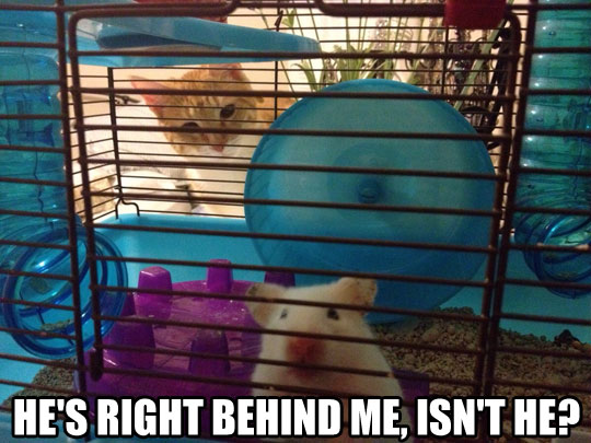 funny-cat-lurker-hamster-cage