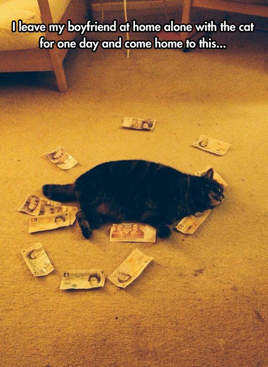 funny-cat-money-fat-kitten-sleeping