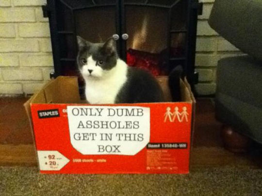 Cats can't read…