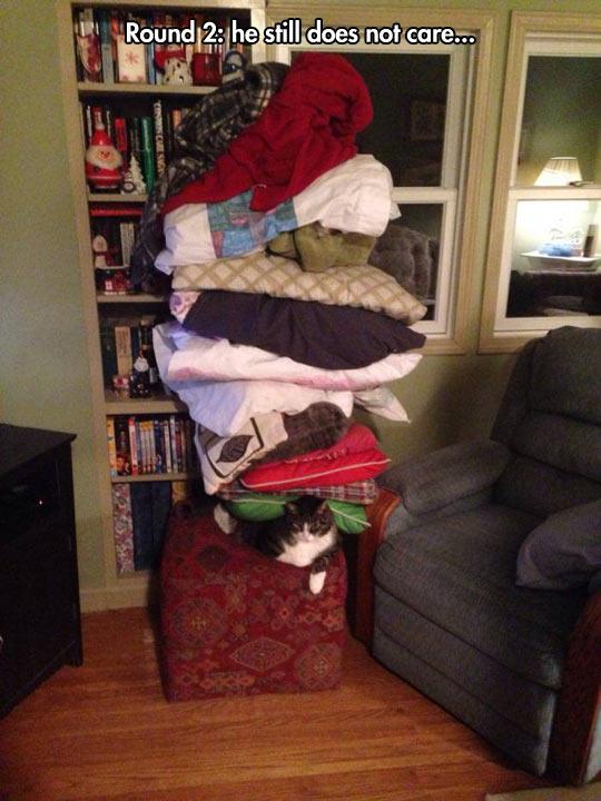 funny-cat-sofa-pillow-blanket