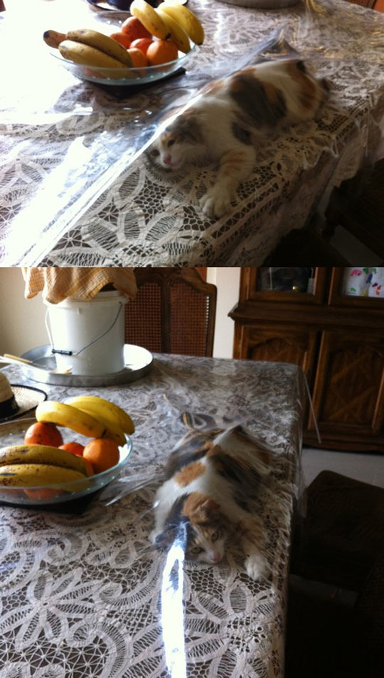 If you've ever had a cat, you'd understand…