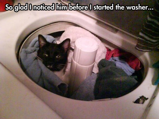Kitty lives a dangerous life…