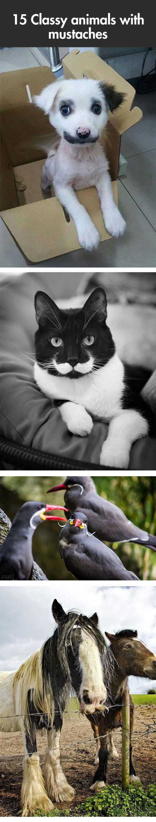 Classy Animals With Mustaches...