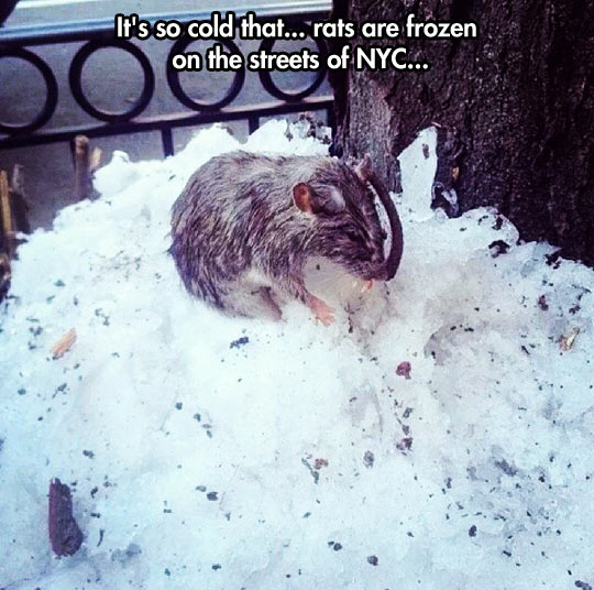 You know is really cold when…