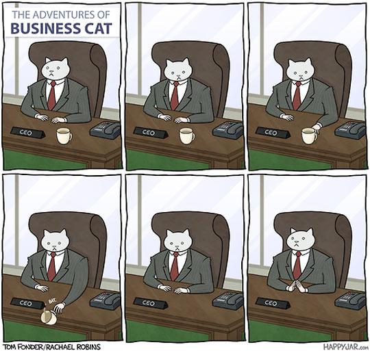 Business cat…