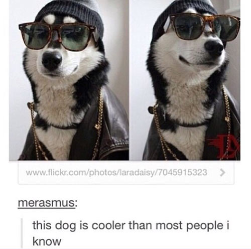 funny-cool-dog-glasses-people