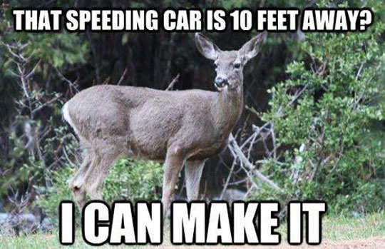 The thinking process of a deer…