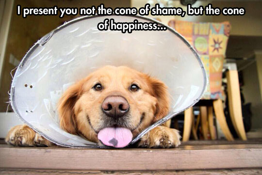 The cone of happiness…