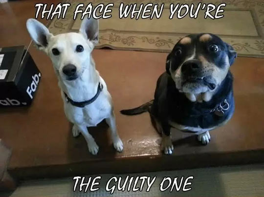 The guilty one…