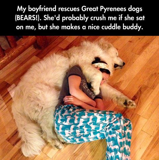 funny-dog-hug-sleeping-nap-floor