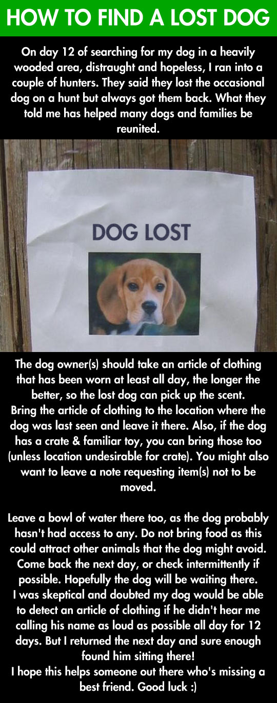 funny-dog-lost-owner-how-finding