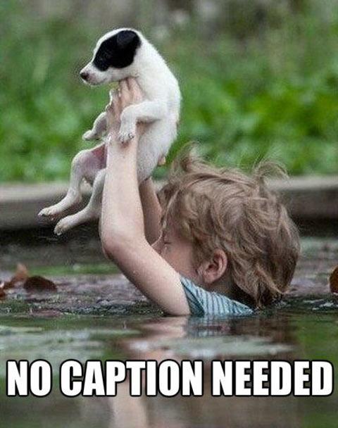 funny-dog-puppy-boy-child