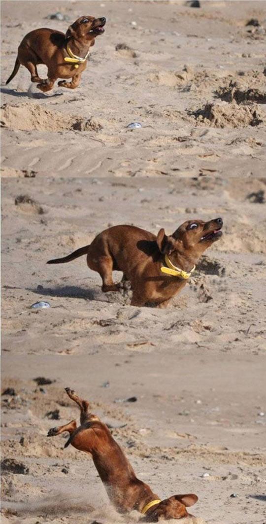 funny-dog-running-sand-beach