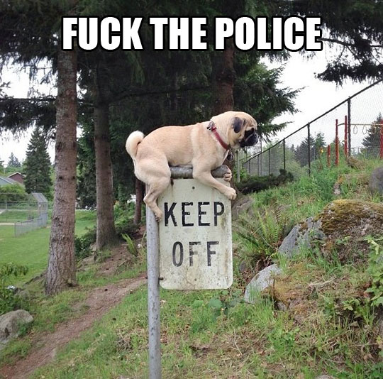 funny-dog-sign-park-keep-off-anarchy