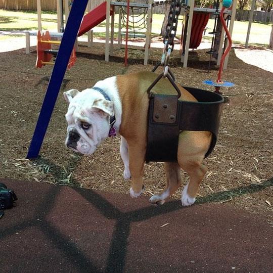 funny-dog-swing-bored-sad-kids-park
