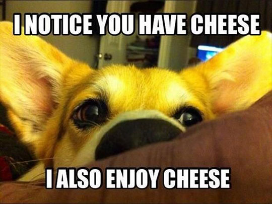 So, you have cheese…