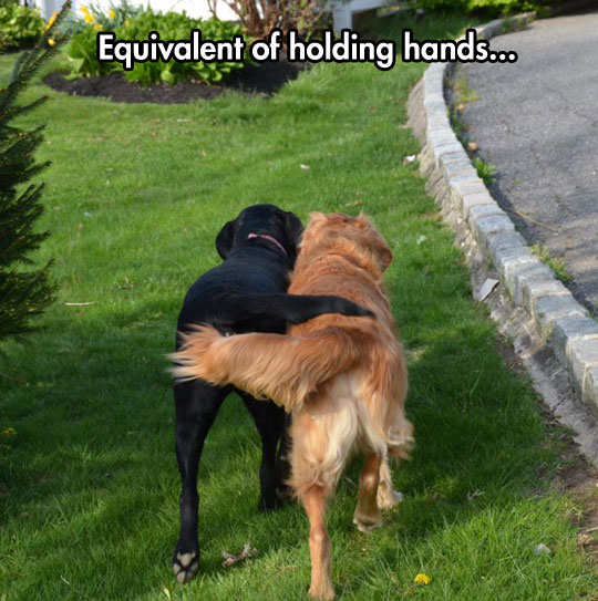When dogs hold hands…