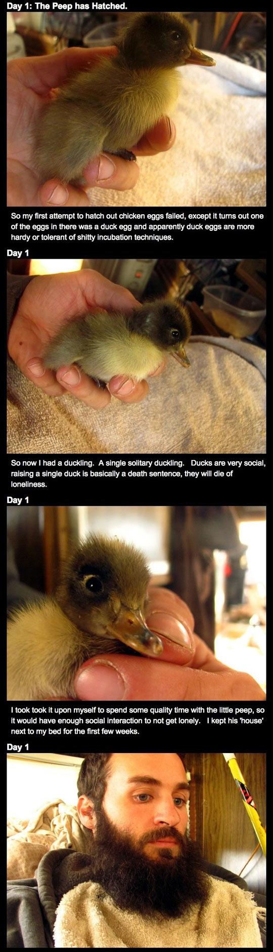 How this man's epic beard saved a duckling's life is brilliantly beautiful...