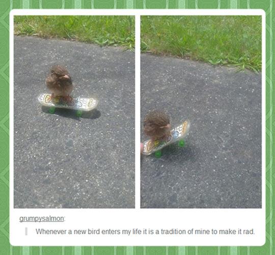 funny-duck-bird-skate-street-grass