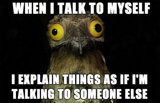 funny-eyes-animals-talking-myself