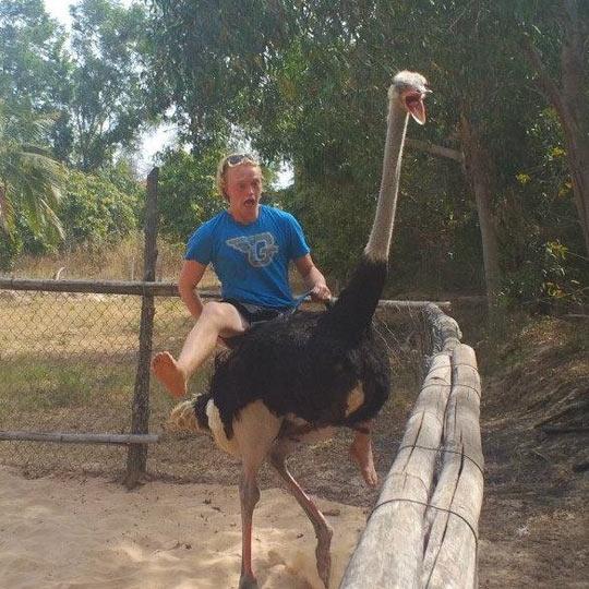 Majestic gentleman riding an ostrich…
