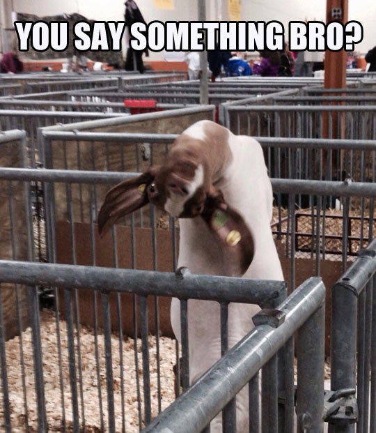 This goat is something else…
