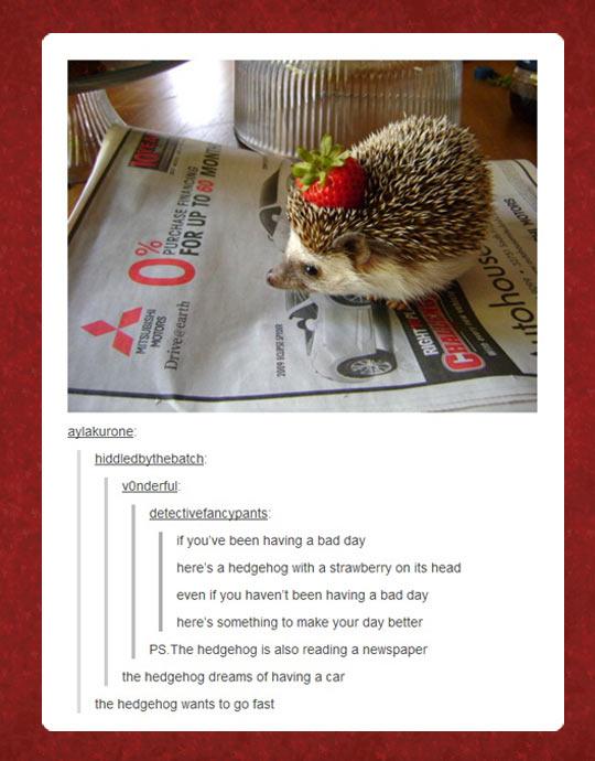 funny-hedgehog-strawberry-newspaper-car