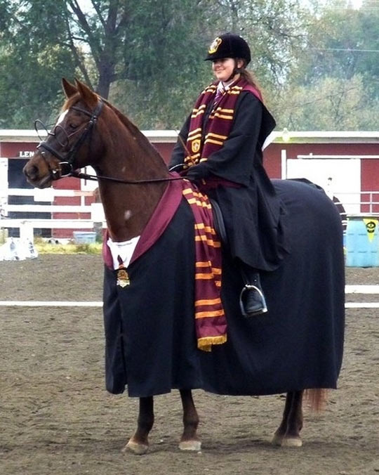 funny-horse-Harry-Potter-costume-glasses