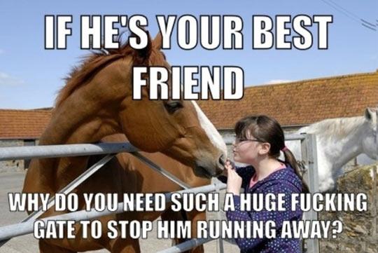 funny-horse-friend-gate-animal
