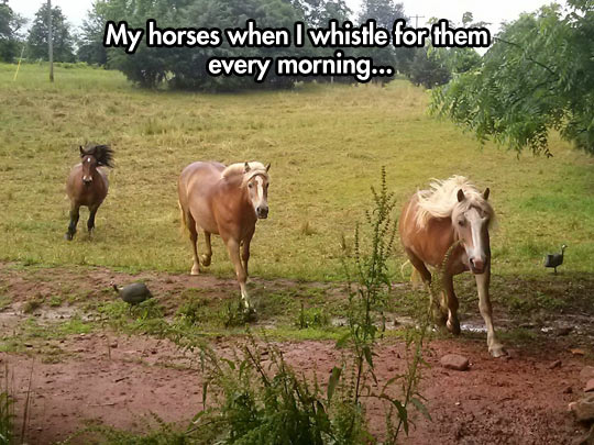 funny-horse-whistle-morning-brown